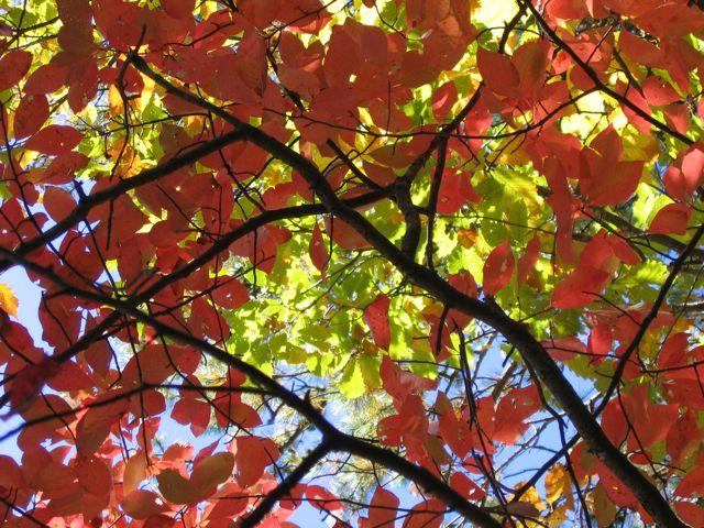 Under the Blue Ridge canopy